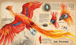 Phoenix-artwork-from-Harry-Potter-and-the-Chamber-of-Secrets-Jim-Kay.jpg