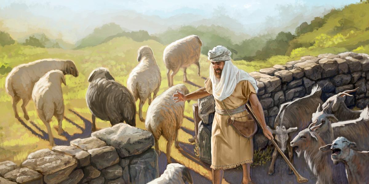 sheepgoats.jpg