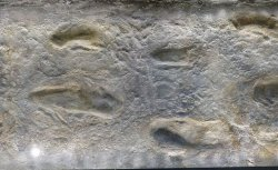 laetoli-footprints.jpg