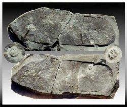 352092aefb94e9fb2138e30c401f4dce--footprint-fossil.jpg