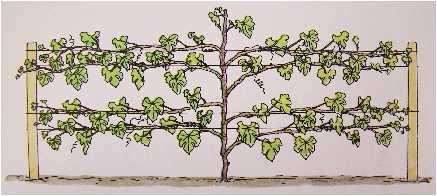 AWHN - Cross - Grape Vine 02.jpg