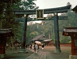Torii-Futarasan-Shrine-Japan-Nikko.jpg