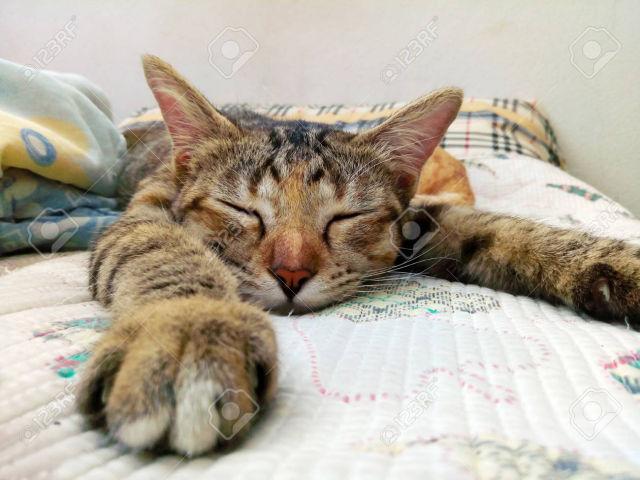Relaxing cat.jpg
