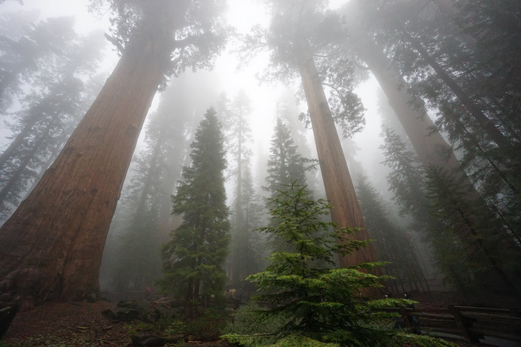 sequoia-02.jpg